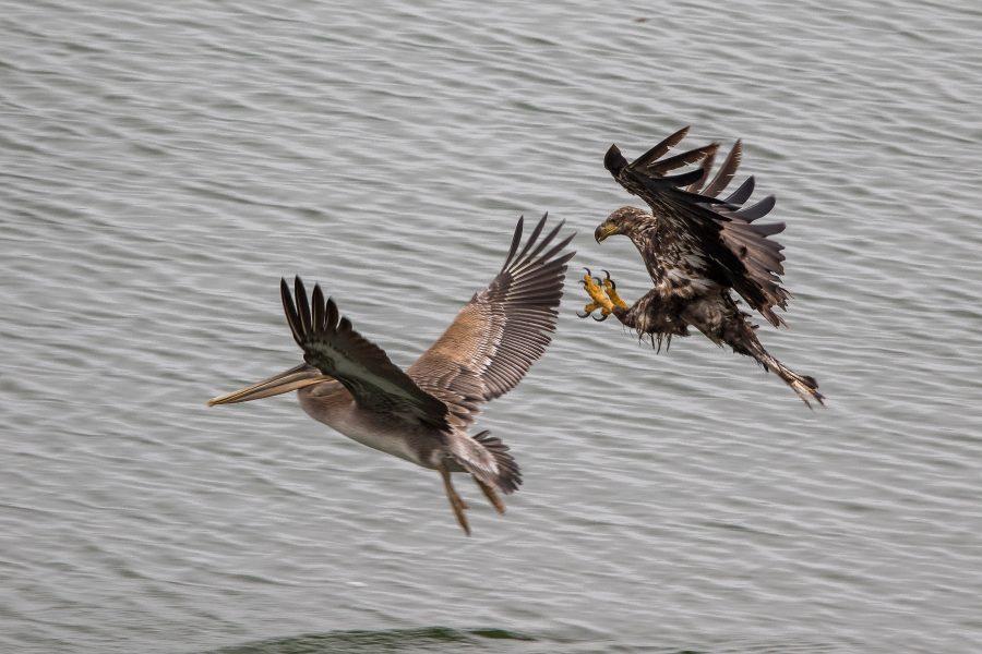 Razor-sharp shot of birds in mid-air took considerable technical skill