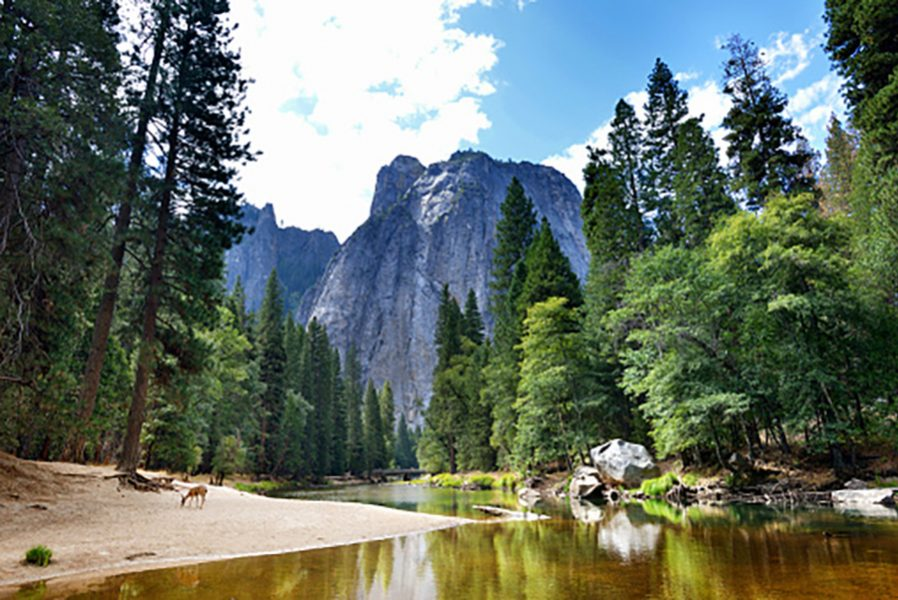 View into Yosemite National Park